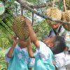 wisata-agro-tlogo-resort-web-support-develop-by-duaide-outbound-perkebunan-durian-2