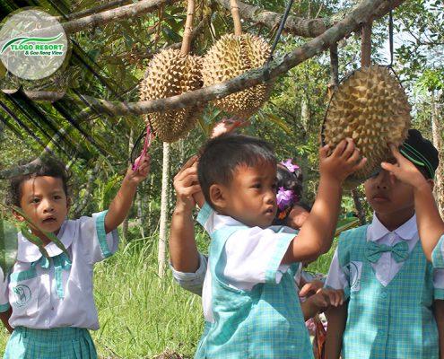 wisata-agro-tlogo-resort-web-support-develop-by-duaide-outbound-perkebunan-durian